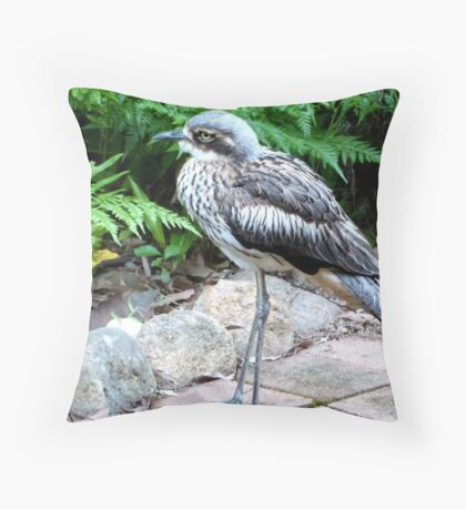 The 'Bush Thick-knee' native N.T. & nth-ea. Queensland. Throw Pillow