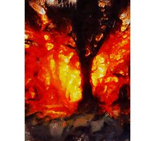 Tree of Fire by Sarah Kirk Photographic Print