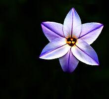 A Pretty Purple Flower by Kate Halpin