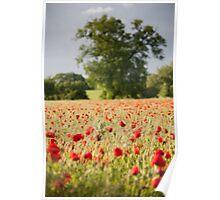 Poppy Field 2012 Poster