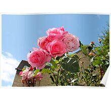 Flower Shot Poster