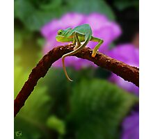 Floral Baby Chameleon Photographic Print