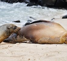 Sea lion feeding by volanthevist