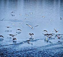 Kerkini Lake-Greece by Tasos Hatzikirou
