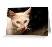 she wore blue and yellow eyes Greeting Card