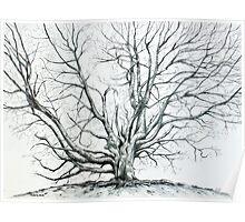 'Winter Tree at Bass Lake' Poster