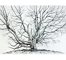 'Winter Tree at Bass Lake' Photographic Print