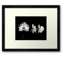 Black With A Hint Of Botanical Element ~ Part Eight Framed Print