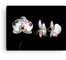Black With A Hint Of Botanical Element ~ Part Eight Canvas Print