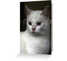 Charming white gold and blue Greeting Card