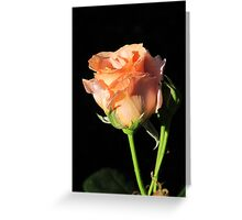 Rosebud Sunset Celebration Greeting Card