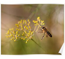Honey bee and fennel Poster