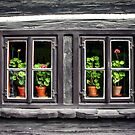 Old Czech home with flowers in windows by ieatstars