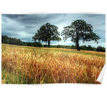 Barley Fields Poster
