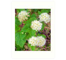 Flowers of White Art Print