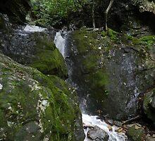 Mountain Stream by Annlynn Ward