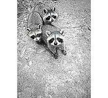 Which One Is The Cutest? Photographic Print