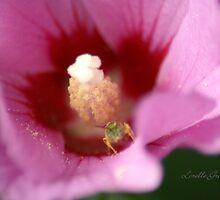 Peeking Out by Lorelle Gromus