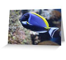 Nemo Lookalike Greeting Card