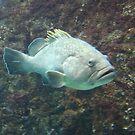 Sad fish by dsimon
