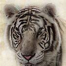 Vanna, the White tiger by vigor