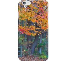 Autumn Trail at Lums iPhone Case/Skin