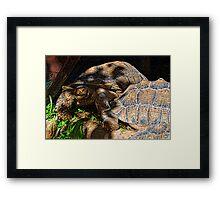 Giant Tortoise........... Framed Print