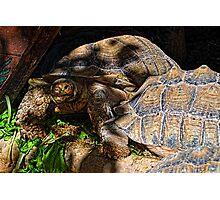 Giant Tortoise........... Photographic Print