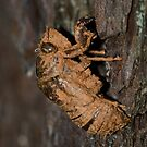 Insect covered in mud! by vasu