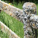 Fungi on Fence by R-Summers
