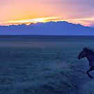 Mustang At Sunset - Utah West Desert by Robbie Knight