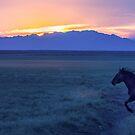 Mustang At Sunset - Utah West Desert by Robbie Knight