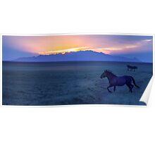 Mustang At Sunset - Utah West Desert Poster