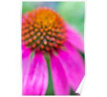 Dreamy Soft Focus Cone Flower Poster