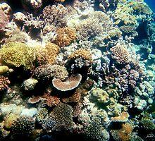 Great Barrier Reef, Australia by Julia Harwood