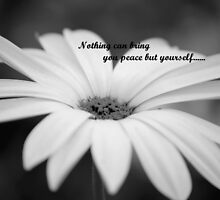 PEACE 2 by PALLABI ROY