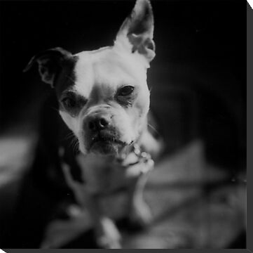My Boston Peggy by L Hartley
