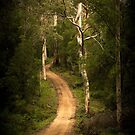 Path into the Forest by Jill Fisher