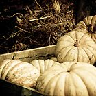 Golden pumpkins by Kell Rowe