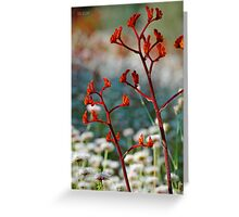 Red Kangaroo Paws 2 Greeting Card