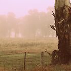 Big Old Gum Tree on a Foggy Day by Lozzar Landscape