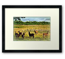 Where The Deer and The Antelope Play... Framed Print
