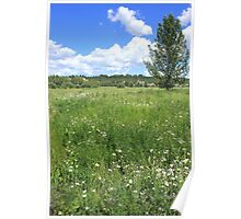 Aspen tree and wildflowers Poster