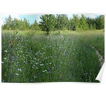 Wildflowers beside hiking trail Poster