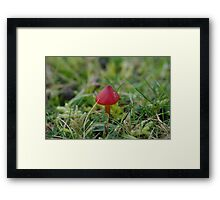 Tiny Red Toadstool Framed Print