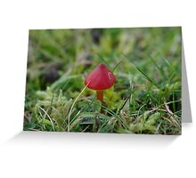 Tiny Red Toadstool Greeting Card