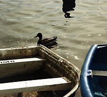 One duck, two boats by Silvanne