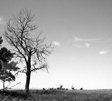 Dead tree on the prairies by Jim Sauchyn