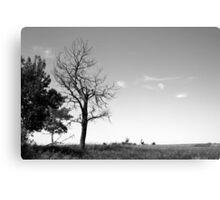 Dead tree on the prairies Canvas Print