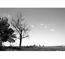 Dead tree on the prairies Photographic Print